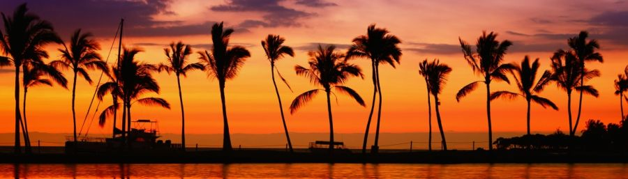 Beach paradise sunset with tropical palm trees.